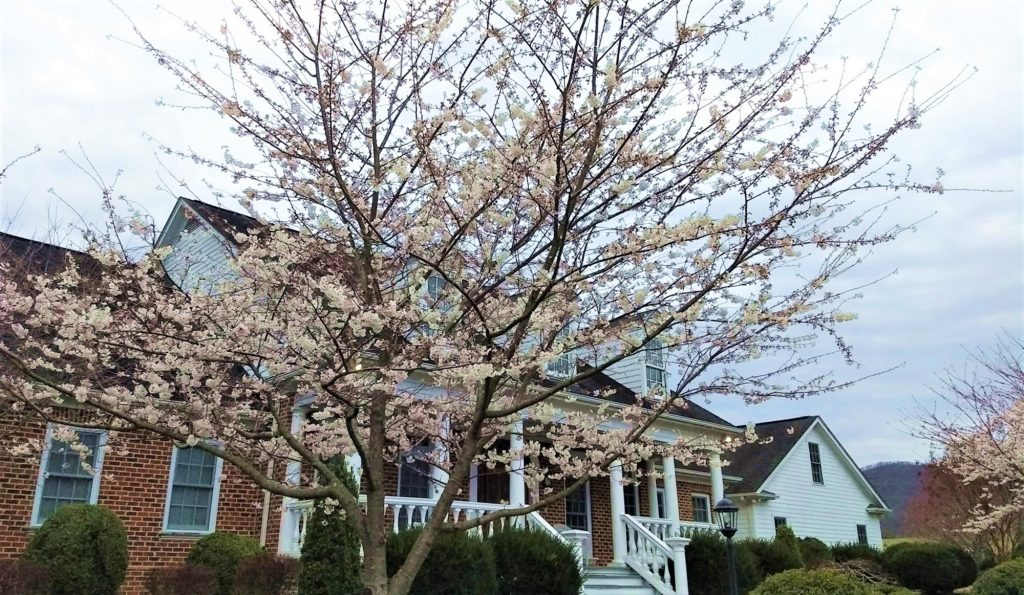 Spring Arrives at Lotus Garden