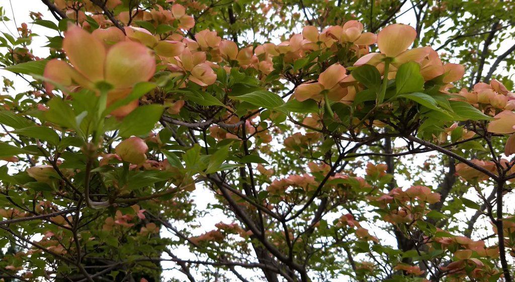 Spring Comes to Lotus Garden