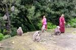 Tshe Thar